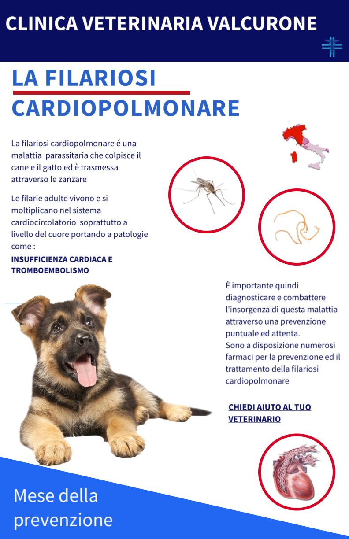 Mese della profilassi della Filariosi Cardiopolmonare